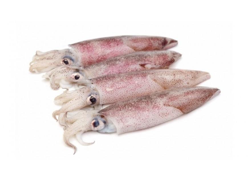I Calamari. Qualche indicazione sul mercato e sulle tipologie